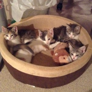 French kittens 04-13-16